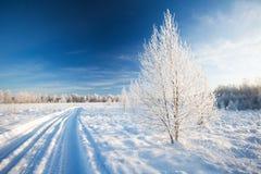 Winterpark im Schnee stockbild