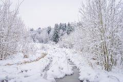 Winterpark in Minsk, Weißrussland Stockbilder