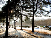 Winterpark mit Sonnenuntergang lizenzfreie stockfotos