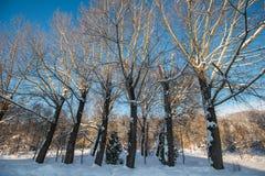 Winterpark morgens Lizenzfreie Stockfotos