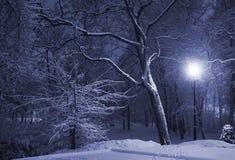 Winterpark nachts Lizenzfreie Stockfotografie