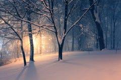 Winterpark und -leuchte hinter den Bäumen Lizenzfreie Stockfotografie