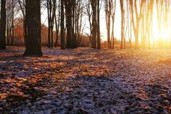 Winterparkstraße bedeckt mit Schnee am Sonnenuntergangsonnen-Glanzweiche Stockfoto