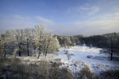Winterparkwald - Archivbild Stockfoto