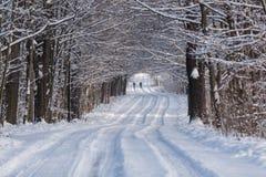 Winterpath di Snowy con il pareggiatore Fotografia Stock Libera da Diritti
