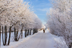 Winterpfad Stockfotos