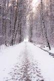Winterpfad Stockfotografie
