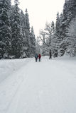 Winterpfad durch Wald Lizenzfreies Stockbild