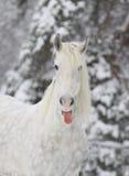 Winterpferd lizenzfreie stockfotos