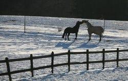 Winterpferde denmak lizenzfreies stockfoto
