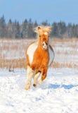 Winterpony geben frei Stockfotos