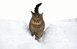 Winterporträt der Katze Stockbild