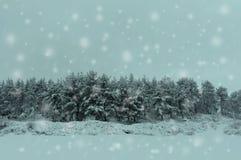 Winterpostkarte mit schneebedeckten Bäumen Lizenzfreies Stockbild