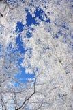 Winterrahmen stockfotos