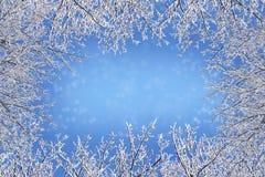 Winterrahmen von den bloßen Niederlassungen umfasst mit Eiskristalle agains Lizenzfreie Stockfotografie