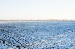 Winterreihen lizenzfreies stockbild