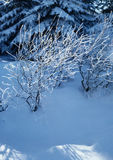 Winterruhe Stockbild