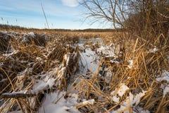 Winterruhe stockfoto