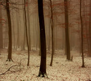 winters drewna zdjęcia stock