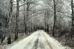 winters drogowy drewna Fotografia Royalty Free