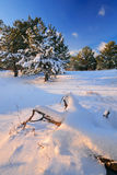 Winters evening Royalty Free Stock Images
