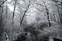 Winters Forest Royalty Free Stock Image