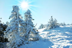 Winters  forest Stock Images