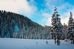 Winters forest Stock Photo
