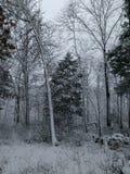 Winters hout Stock Fotografie