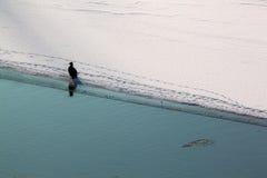 Winters Landschap met Grote aalscholver Royalty-vrije Stock Fotografie