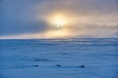 Winters landschap in nevelige voorwaarden royalty-vrije stock foto's
