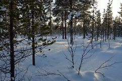 Winters landschap in Zweeds Lapland Stock Foto