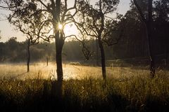 Winters morning with fog on the lake. Early morning scene at Lake Tinaroo Queensland Australia with  mist and fog coming off the water and a sunburst through the royalty free stock images