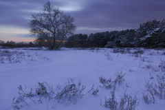 Winters night Royalty Free Stock Photos