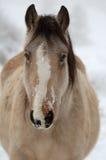 Winters Paard Royalty-vrije Stock Foto's