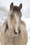 Winters Paard Stock Afbeeldingen