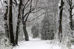 Winters picture of the Dutch winter Stock Image