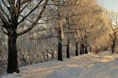 Winters Russisch landschap Stock Fotografie