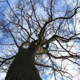 Winters Tree Royalty Free Stock Photo
