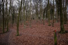 Winters walk at Queen Elizabeth's Country Park royalty free stock image