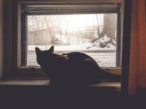 Wintersaison mit der Katze sitzen und wartend nahe bei dem Fenster Lizenzfreie Stockbilder
