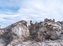 Wintersaison schneebedeckt auf der Fox-Ansicht stockbild