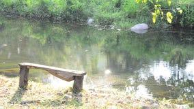 Wintersaison am Wald und Strom oder Kanal von Suan Phueng stock footage