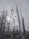 winterscape Arkivbild