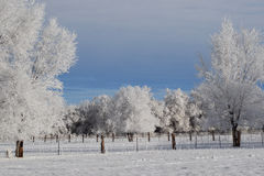 Winterscape Images stock