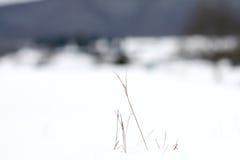Winterscape fotografia stock libera da diritti