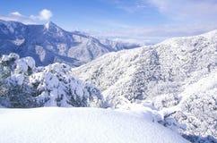 Winterscape sequoianationalpark, Kalifornien Royaltyfri Fotografi