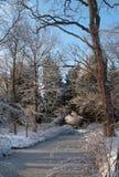 Winterscene Image libre de droits