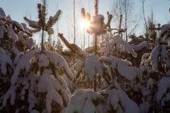 Winterscheine Stockfotografie