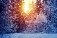 Winterschnee-Baum- des Waldessonnenunterganghintergrund Roter Sonnenuntergang in der Winterschnee-Baum- des Waldesszene Winterson stockfotos